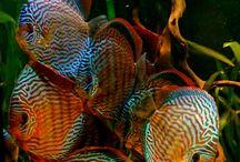 Coola fiskar