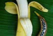 << Bananas >> / Please visit the @GR2Food Archives @ http://gr2food.com/tag/bananas/ to browse our collection covering health and agricultural issues related to bananas. / by GR2Food Institute
