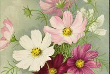 Çiçekler / Renk renk
