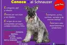 Razas de perros / Conoce las distintas razas de perros