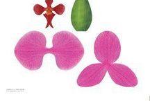 orhidee din hartie