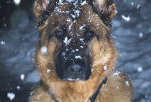 cute dogs :)