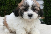 Puppies and Dogs I Like / puppies and dogs I want