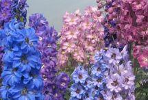 Purple Flowers in May / Purple flowers in season during May