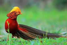 10 Burung Tercantik di Dunia Tak Pernah Tergantikan Hingga Sekarang