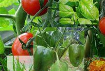 Veges / Garden