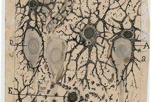 Ramón y Cajal