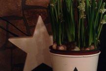 My flowers / 2014 március 25