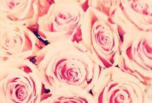 flowers / by Yasmin Melo