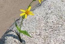 """sarı """"sabır"""" çiçeklerim..! / sabret diyorlar..!.. SABRET"""