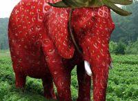 to słoń czy truskawka?
