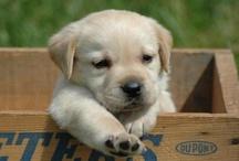 Aww da puppyyyy <3 / by Alexandra Hz