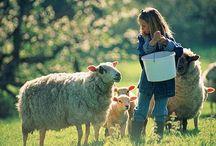 Farm Stay Plan