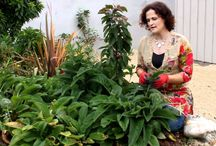 Herbs and Herbology