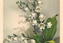 Flowering  Postcards