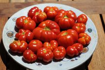 Organic Gardening / Share knowledge and ideas of organic cultivation.