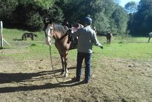 Cool ...Horse Guests Pix / Some of our guests here at Adventure Horse Riding NYS