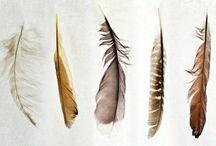 feather / by Deb Ellis
