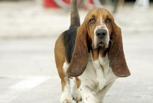 Basset Hounds, loves them! / by Kimberly Spiers