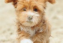 Pets I want!