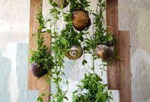 plants - balkon projekt