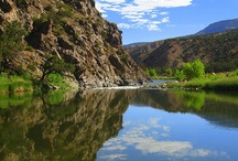 Gunnison River - Colorado / This GOLD MEDAL TROUT FISHERY offers 1 to 3 day trips as a float for fishing or overnight whitewater rafting adventures.   Exclusive options as maximum persons is 8 - 10 for one of these selected dates.  Secure your reservation at DvorakExpeditions.com