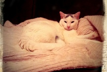Leon the cat. / Our nice furry family member.. / by Esterlita B.