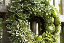 succulent / by Brandy Savarese