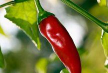 Mijn Moestuin (Vegetables, fruit & herbs garden) / Challenge accepted! Growing my own vegetables, fruit and herbs