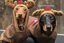 Christmas Dachshunds / Christmas and Dachshunds, what could be better?