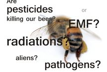 SAVE THE BEES / Why? Because they not only pollinate our crops but give us incredibly healthy products. Save the bees and they ourselves! :)