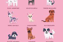 Mascotas / Información útil sobre mascotas.