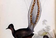 Birds - art, drawings, doodles, prints