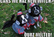 Boston Terriers/Pugs/Boxers! / by Kelly Ryken