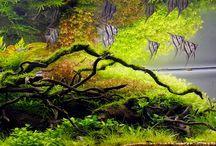 Akwarium | Aquarium / Pomysły i inspiracje na mój podwodny świat. #projekty ładnych #akwarium, #rybki #akwariowe, #sprzęt akwarium. To wszystko będę zamieszczał na tej tablicy