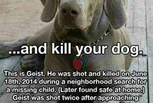 Justice of animals