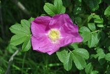 FLOWER / Moje foto