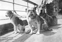 Pets in Politics and History / by Cheri Foley
