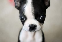 All doggies: cute and cuter / by Janice Carbon