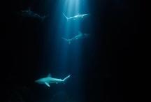 ....sott'acqua....