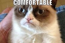 Grumpy cat / grumpy cat is one of my spirit animals