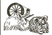 Angora Rabbit Wool