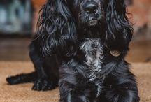 Cat Detection Dogs UKPD The United Kingdom Pet Detectives