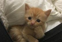 Cute dyr