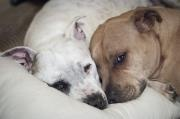 My Dogs / Photos of my dogs - adopted from a shelter :)