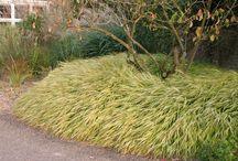 Garden -  Semi shade / sun loving plants