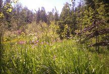 Kesätorpalla / Little red cottage / Living in a little red cottage. Gardening. Summer. Finland. Pieni punainen torppa. Puutarha. Kesä.