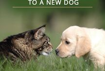 dog and cat info