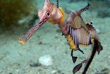 Ocean Life / by Carolyn Murray