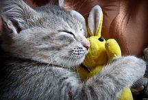 CatDeva บทความแมว ประกาศซื้อขายแมว ออนไลน์ฟรี / CatDeva บทความแมว ประกาศซื้อขายแมว ออนไลน์ฟรี http://www.catdeva.com/